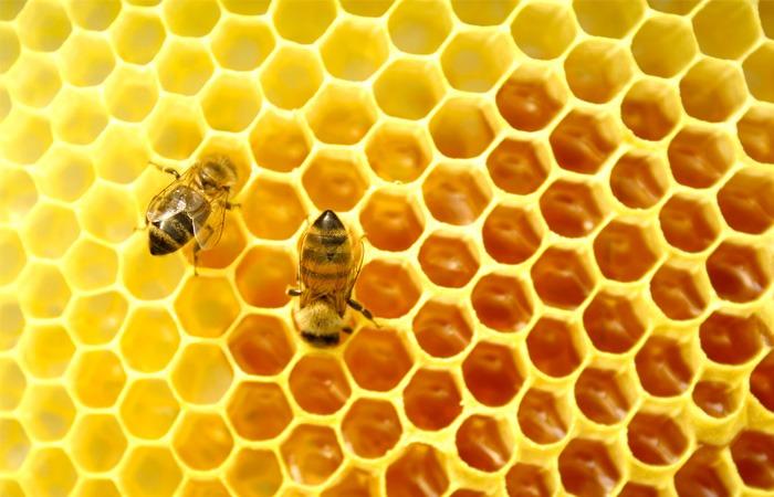 خواص عسل-فروشگاه آجیل و خشکبار هفت مغز-7maghz-وبلاگ هفت مغز