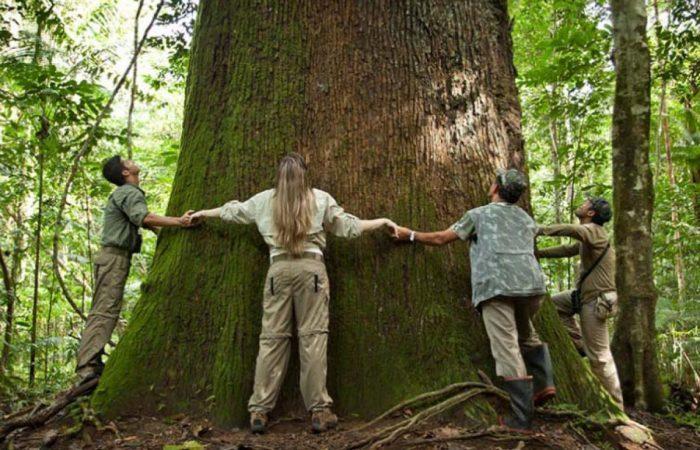 درخت آجیل برزیلی