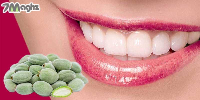 چغاله بادام برای تقویت لثه و دندان