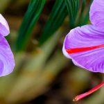 مصلح زعفران چیست؟
